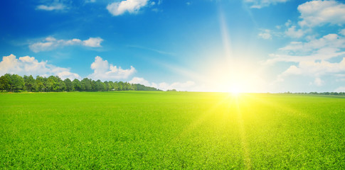 Green field and sun rise in the blue sky. Wide photo.