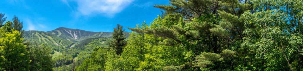 Panoramic view of a forest near Whiteface Mountain in Adirondacks