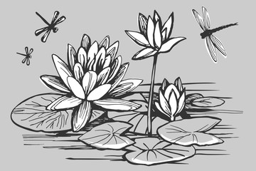 White flowers of a water lily