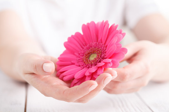 Soft tender protection for woman critical days, gynecological menstruation cycle, pink gerbera in hand