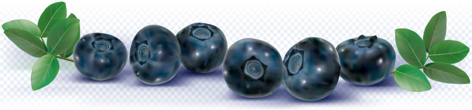 Blueberries in a line