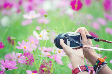 Travel of Photographer woman,take photo with mirrorless camera.People side view,Young traveler girl sightseeing with beautiful cosmos flower background in garden. Travel and Photographer concept.