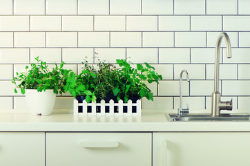 Mint, thyme, basil, parsley - aromatic organic herbs on white kitchen table, brick tile background. Potted culinary spice plants. Minimalistic lifestyle concept. Copyspace. Banner.