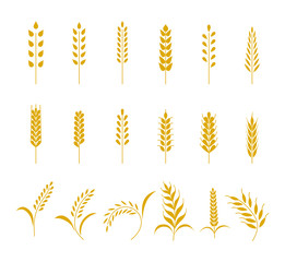Set of simple wheats ears icons and grain design elements for beer, organic wheats local farm fresh food, bakery themed wheat design, grain, beer elements. Vector illustration eps10