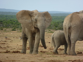 South Africa, Addo National Park - P1080909