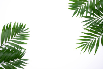 Green palm leafs isolated on white background