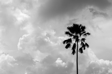 silhouette of a palm tree - monochrome
