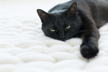 Black cat relaxing on white knitted merino plaid, hygge home