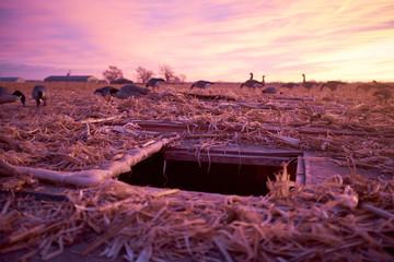 Underground hide with decoy waterfowl