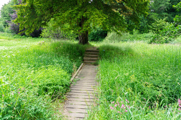 Scottish Country Walkway and some Steps