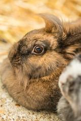 Cute tiny furry rabbit closeup
