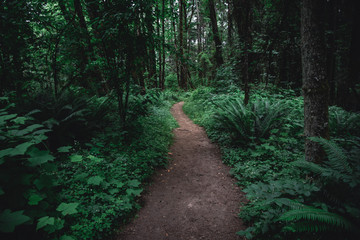 Lush green Pacific Northwest forest hiking trail