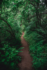 Lush hiking trail in Portland's Forest Park
