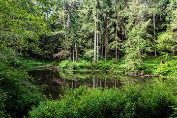 Forest pond with lush green spring overgrowth and reflection