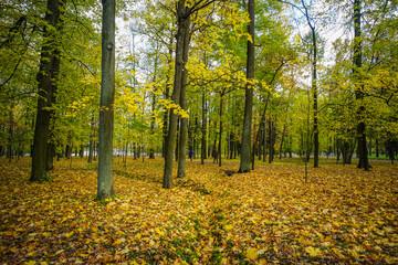 Autumn garden in St. Petersburg, Russia