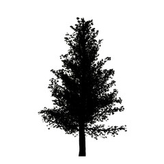 Black silhouette of a pine tree isolated white background