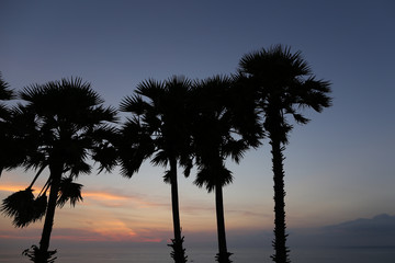Palms black silhouettes in sunrise sky and sea in background. Concept of calm morning on exotic tropical island.