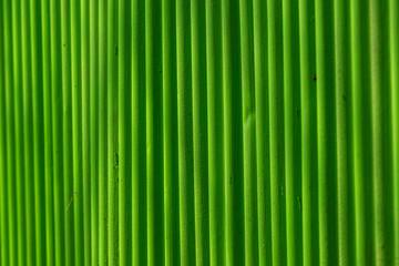 Grünes Wellblechmuster