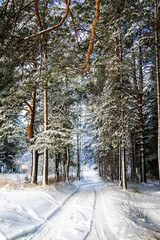 Trees covered snow in winter forest