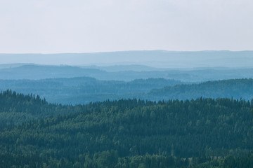 Foto op Canvas Bos View to beautiful forest from hill, Koli National Park, Finland