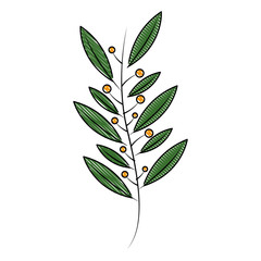 natural branch leaves seeds botanical vector illustration