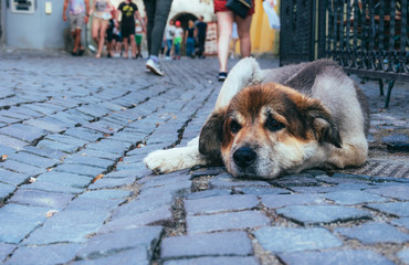 Homeless dog on the street of the old city