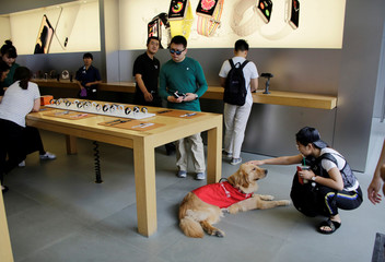 A customer touches a seeing eye dog at an Apple store in Beijing's Sanlitun area