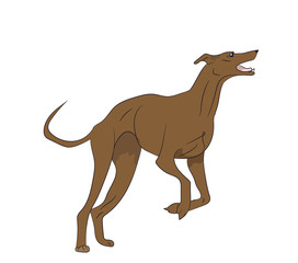 the dog is jumping, color, vector