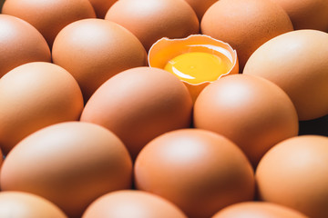Chicken eggs and egg yolk in a row.