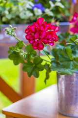 Geraniums and flower decoration in pots on the terrace.