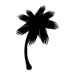 Silhouette palm icon tree flora