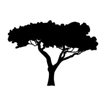 Silhouette Acacia icon tree flora
