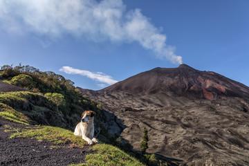 Volcano Pacaya (active) and dog, Guatemala, May 2018