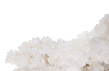 lush white isolated coral corner