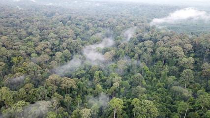 Rainforest in Borneo