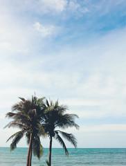 coconut palm tree with beach and sunny sky