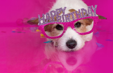 CUTE BIRTHDAY DOG CELEBRATION ON PINK BACKGROUND