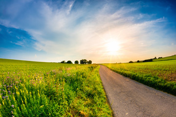 Landscape in spring with narrow road, bright sun and green fields