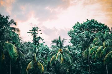 Tropical background - jungle