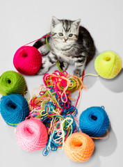 little kitten with many multi-coloured clew