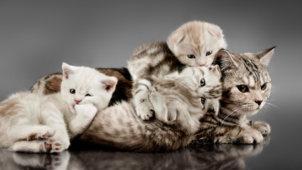 family group cats
