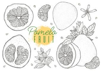 Set vector hand drawn pomelo fruit. Vintage style,Black contour.