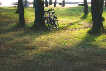 pair of bikes leaning against the tree