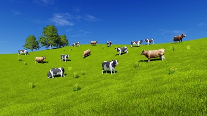 Wall Mural - Herd of mottled milk cows graze on green farm grassland under blue sky at summer day. Rural landscape 3D illustration.