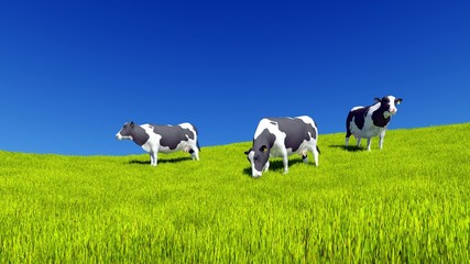 Wall Mural - Mottled dairy cows graze on the farm meadow covered with fresh green grass under clear blue sky at daytime. Countryside landscape 3D illustration.