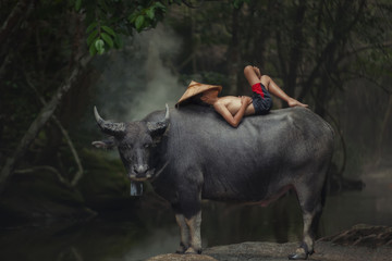Tuinposter Buffel Asia children sleeping on water buffalo at rural.