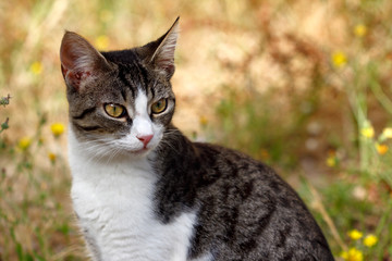 Portrait of feral multicolored cat in the countryside