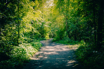 Path in a summer sunny forest