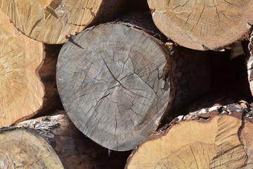 Large trees felled