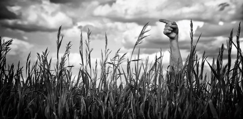 Hand shows a sign to the right, looking out of the grass (black-and-white)